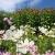 Blumengarten . Nymans House & Garden . bei Handcross . England (Foto: Andreas Kuhrt 2016)