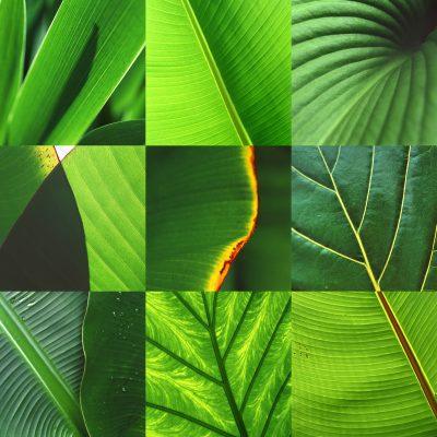 Fotosynthese: Grün (Fotos & Gestaltung: Andreas Kuhrt)
